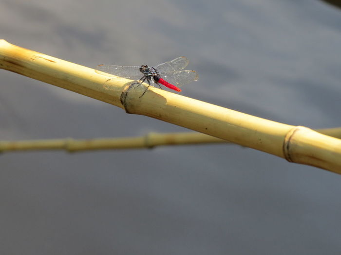 Amazon Amazon Rainforest Amazon River Amazonas Brazil Dragon Fly Insect Nature At Its Best Nature Up Close