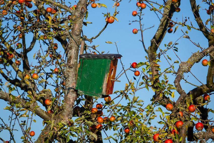Apfelbaum💫 äpfel Am Baum Vogelnistkasten