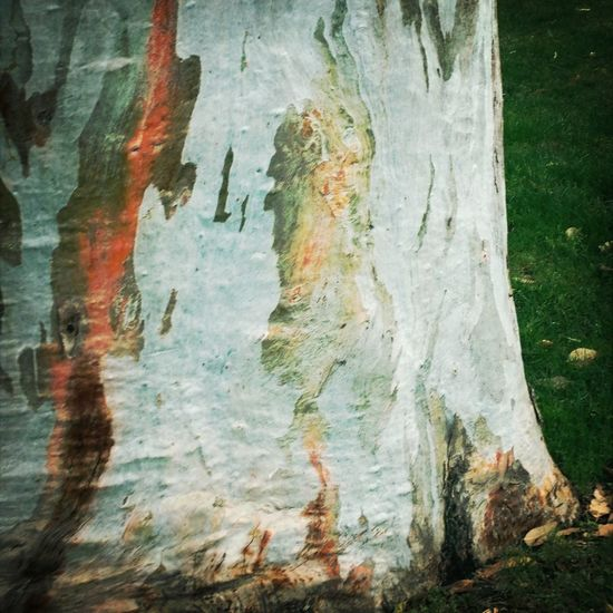 Tree Reminder