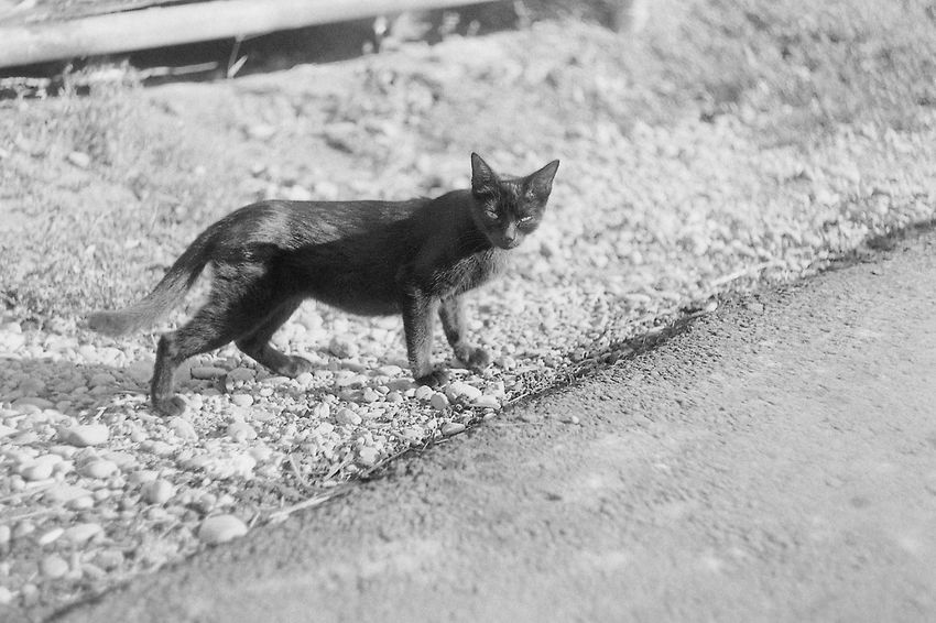 Glum russian cats p. 3 35mm Film CHM Universal 100 Black And White Cat Film Photography Helios 44-2 58mm F2