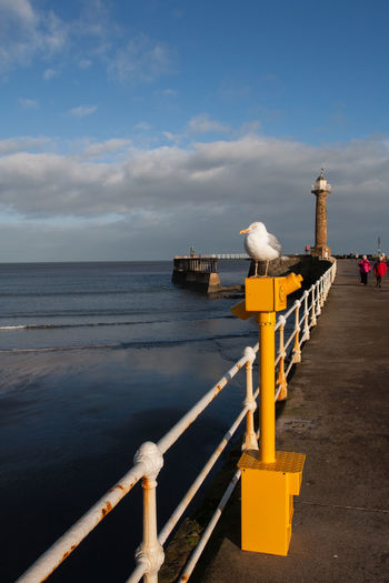 A view of Whitby Pier, North Yorkshire, UK with a seagull sitting on a telescope and the old lighthouse in the distance Water Sky Cloud - Sky Sea Railing Architecture Built Structure Horizon Nature Day Horizon Over Water Beauty In Nature Scenics - Nature Outdoors Security Travel Destinations Protection Tranquil Scene Pier Holiday Resort Copy Space Blue Sky Seaside Lighthouse Seabird