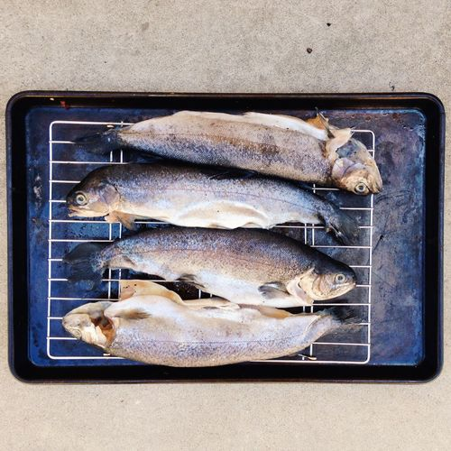 Directly above view of fish on metal grate in tray