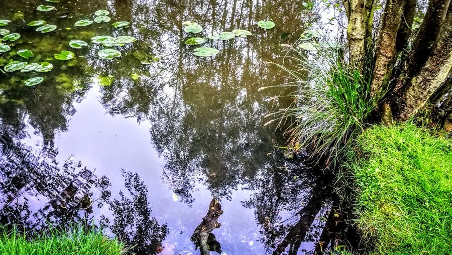 Water Reflections...in a really amazing nature... Tree Nature Reflection Outdoors Beauty In Nature Green Color GetbetterwithAlex Wendland Original Picture