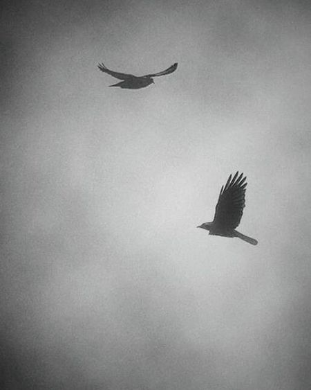 Crossing Birds Paris Bird Fog Foggy Sky Cloud Bnw Bnwmood Cloudporn Nature Naturelovers Ig_birds NYC Bnw_rose Ig_masterpiece Bnw_captures Birdgang Bnw_life Cloudy Clouds Fly Ignation Leica Canon art explorer monoart