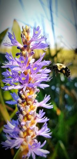 Carpenter Bee Collecting Pollen Nature_collection EyeNatureLover Woods In The Water Wetlands Sky Clouds Bee Pollen Passion Flower Cosmos Flower Single Flower Osteospermum Coneflower Blooming Eastern Purple Coneflower Lavender Colored In Bloom Wildflower Plant Life Pistil Flowering Plant