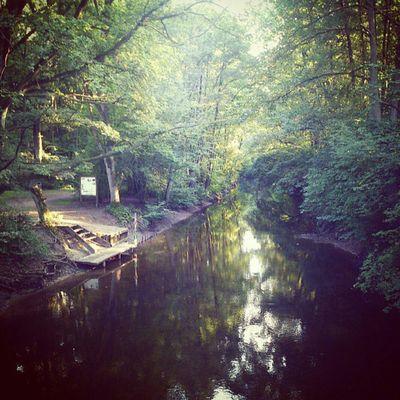Nature Water Ich Liebe Bäume! ♥ Sunshine Relaxing