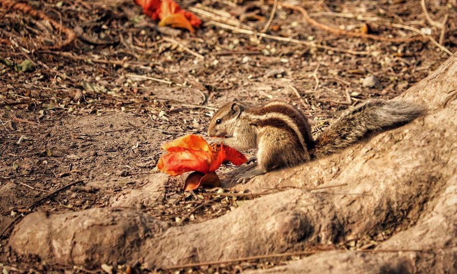 shy squirrel Daylight Candid Photography For Squirrel Kitlens Wildlife Photography Wildlife & Nature Adventure Canon Canonphotography DSLR Satisfaction Timing Animal Wildlife Outdoors Animal Themes