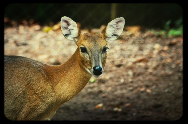 What you looking at?? ? Animal Wildlife Photography