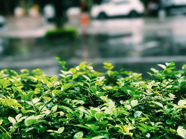 a raining day Raining Rainy Day Green Color Freshness Growth Leaf Plant Part Plant Day No People Nature Close-up Wet Selective Focus Outdoors Beauty In Nature Focus On Foreground