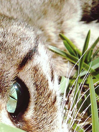 EyeEmNewHere Eyes Watching You DontWorryBeHappy This Is One Animal In Natural Environment Pet Portraits