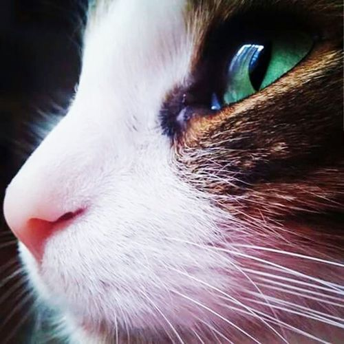 Hello World Cat Pet Photography  Cat Portrait Green Eyes Cat Lovers Kitty Handsome Eyes Portrait