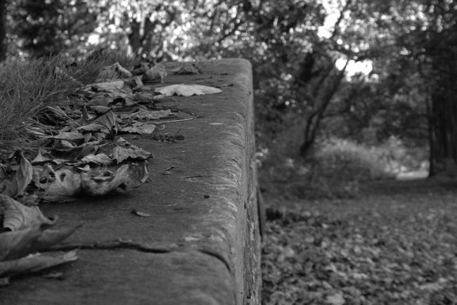Black And White Blackandwhite Black&white Black & White Fallen Leaves Old Train Station