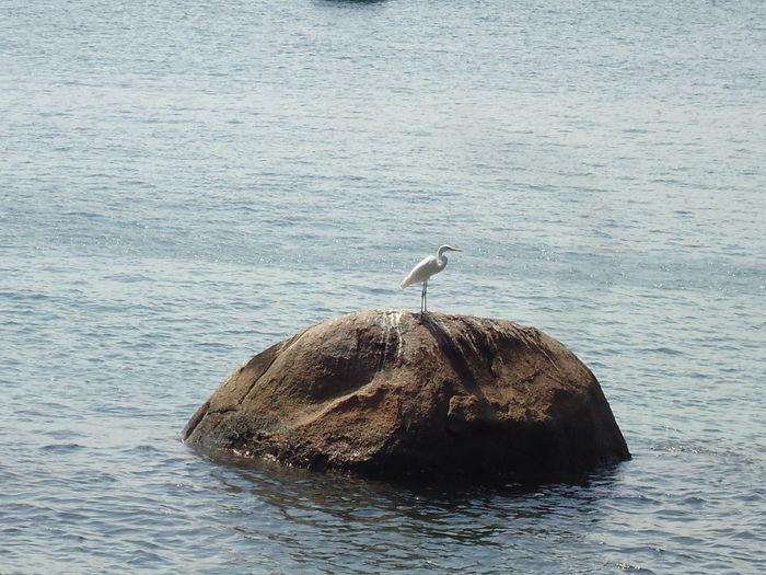 Bird perching on sea shore