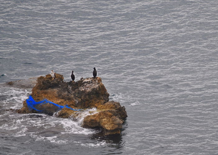 Blue Net Balearic Islands Blue Fisher Net Ibiza Ibiza Town Mediterranean Sea Pitiusa Rocks Tourism Water Waterbirds Sea Nature Animal Themes High Angle View Day No People Outdoors Animals In The Wild Beauty In Nature