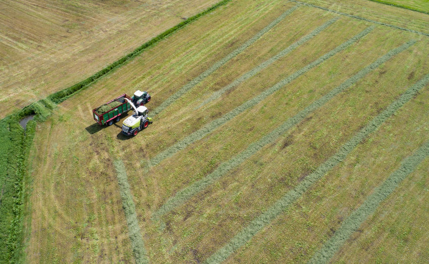 Grass harvester and tractor in the grass chop for animal feed
