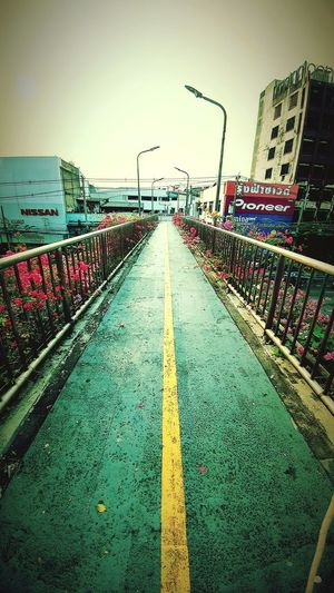 """ the route "" Walkway Outdoors Colors Green Road Tree Yellow The Bridge Frowers Pink Iron Rail Electric Pole Sky Buildings"
