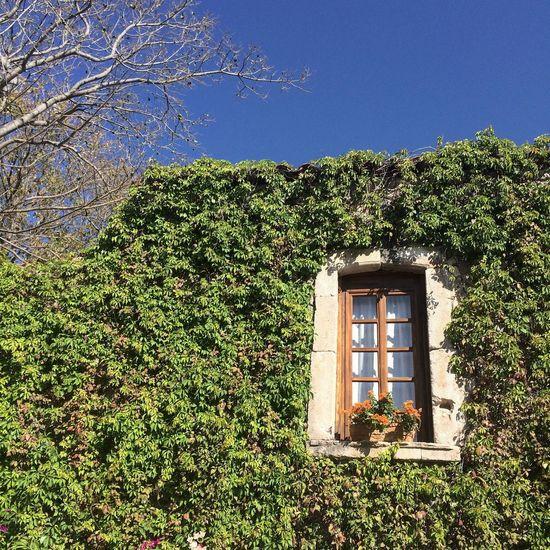 Ventana y muro verde. Greenwall Window Hotel Penjamo