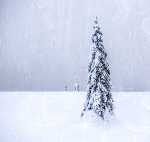 Beauty In Nature Christmas Cold Temperature Copy Space Day Frozen Nature No People Outdoors Scenics Snow Snowflake Snowing Spruce Tree Tranquil Scene Tree White Color Winter