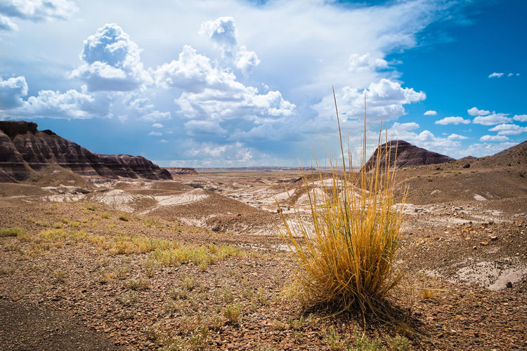 Scenic view of landscape against sky at petrified forest national park