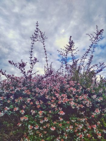 Garden Flowers Huawei G9 Huawei Photography Morning Beauty In Nature Blooming Blossom Branch Cloud - Sky Day Flower Flower Head Fragility Freshness Garden Photography Growth Huaweiphotography Nature No People Plant Springtime Tranquility