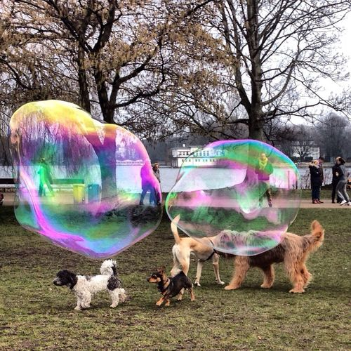 Dogs Bubbles Enjoying Life Hamburg