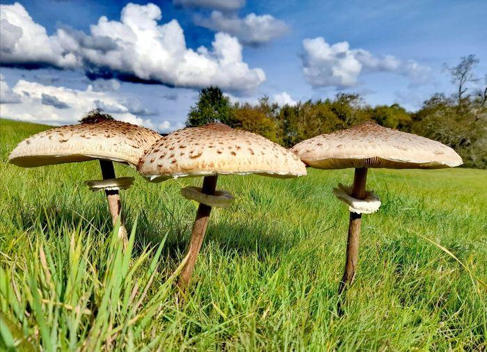 Mushrooms growing on field against sky