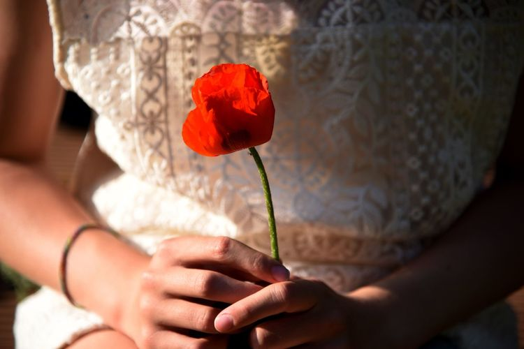 Soft Tender Fragil Fragility Care Holding Poppy Flower Poppy Holding Human Hand Real People Flower Hand Women Rose - Flower Red Lifestyles Beauty In Nature Flowering Plant Human Body Part Positive Emotion Focus On Foreground One Person Nature