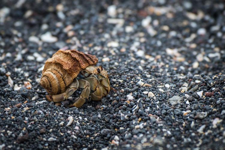 Close-up of hermit crab at beach