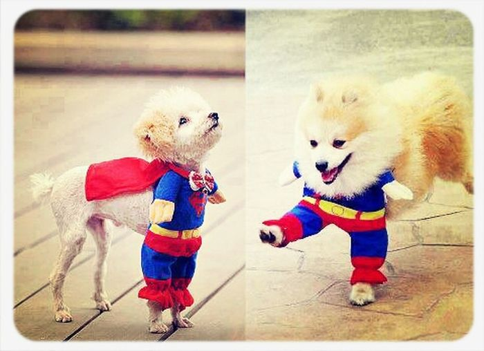 Even tiny is SUPER