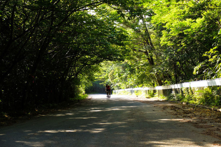 Rear view of people walking on road amidst trees