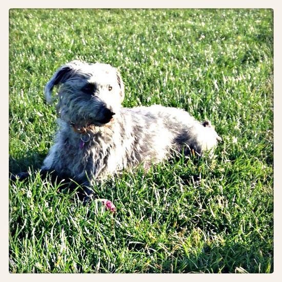 Beaut Dog Love Dog Walking Dog Lover daisy may
