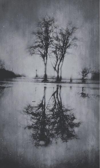 PuddleMoon😜 Water Reflections Silhouette TreePorn Fortheloveofblackandwhite The Darkness Within EyeEm Best Edits EyeEm Nature Lover EyeEm Best Shots Tadaa Community