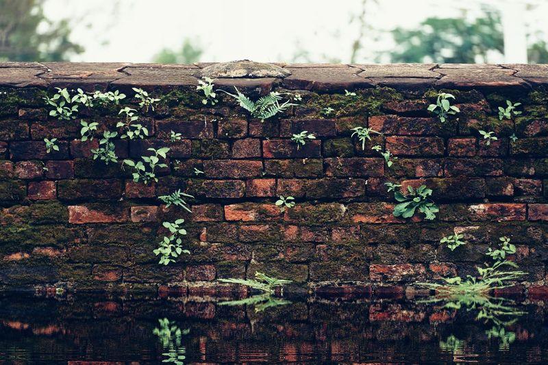 abandon Sky Close-up Ivy Creeper Plant Growing Brick Wall Creeper Young Plant Brick Fungus Overgrown