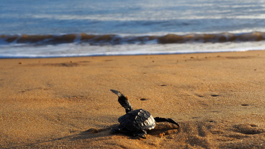 Water Beach Animal Themes Animal Sea Sand Nature Wave Turtle Travel Travelphoto Travelphotography