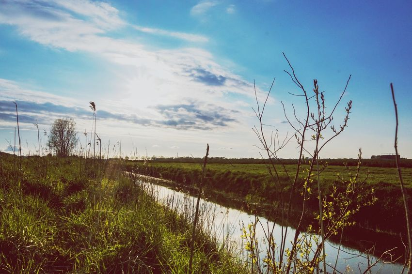 Small river Sky Nature Outdoors Field Day Growth Water Agriculture Beauty In Nature Grass No People