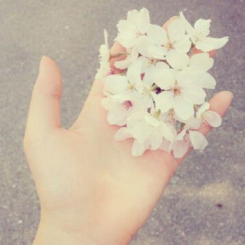 21번째 봄 봄봄 봄스타그램 벚꽃 🌸🌸🌸
