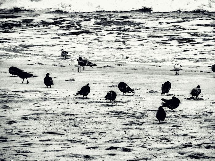 Animals In The Wild Water Animal Wildlife Animal Themes Nature Bird Large Group Of Animals Outdoors Sand Beach Lake No People Day Low Tide Swimming Beauty In Nature Wrightsville Beach Johnny Mercer's Pier Wrightsville Beach NC Power In Nature Travel Destinations Abstract Wet Sea Wave