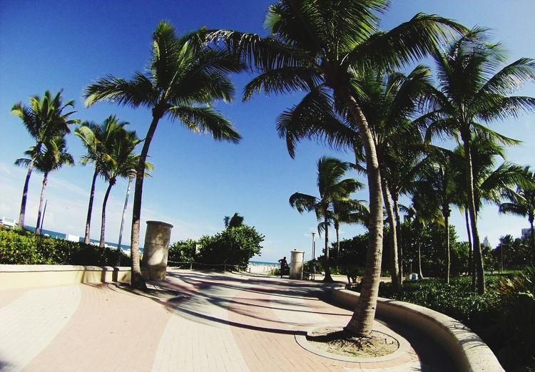Miami Ocaendrive USA 🇺🇸🏄🏼☀️🍹 Taking Photos Enjoying Life