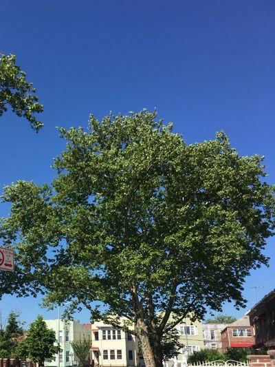 Blue sky's love it 😍