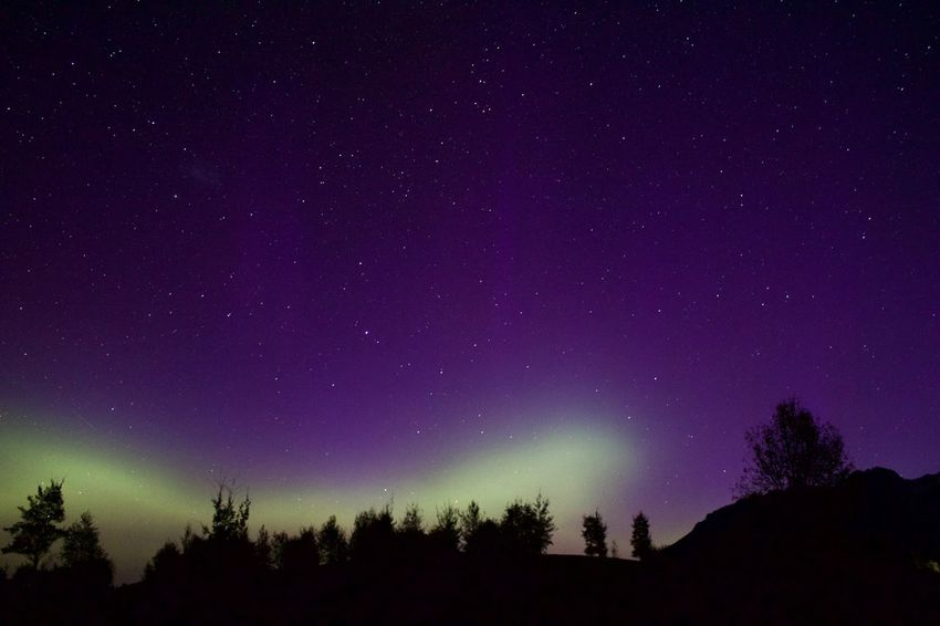 Southern Lights - aurora Australis Southern Lights Aurora Australis Night Beauty In Nature Silhouette Star - Space Tranquility Scenics Tree Astronomy Star Field Sky Starry Galaxy Outdoors Space