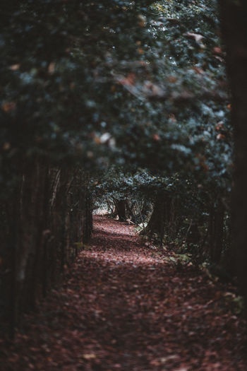 ForForest trail in Autumn Tree The Way Forward Direction Plant Land Trunk Tree Trunk Selective Focus Nature Forest Tranquility No People Footpath Growth Day Beauty In Nature Outdoors Diminishing Perspective Tranquil Scene WoodLand Trail