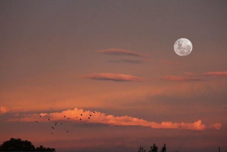 Sunset Full Moon Moon First Eyeem Photo