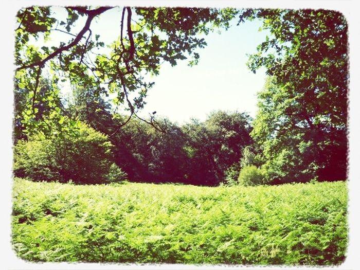 Eppingforest
