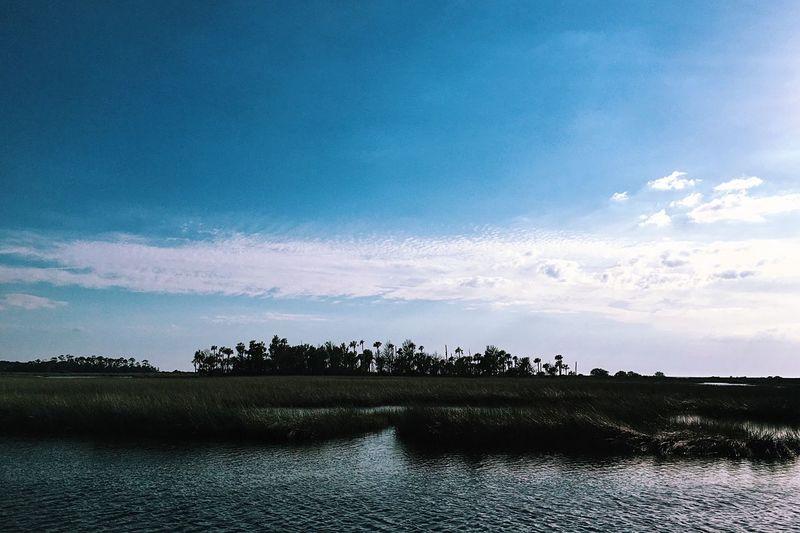 Florida Wilderness. Fresh Air Nature Nature Photography Landscape Landscape_photography Landscapes Palm Trees Ocean Minimalism EyeEm Nature Lover Eye4photography  Florida Wilderness Exploring Springtime