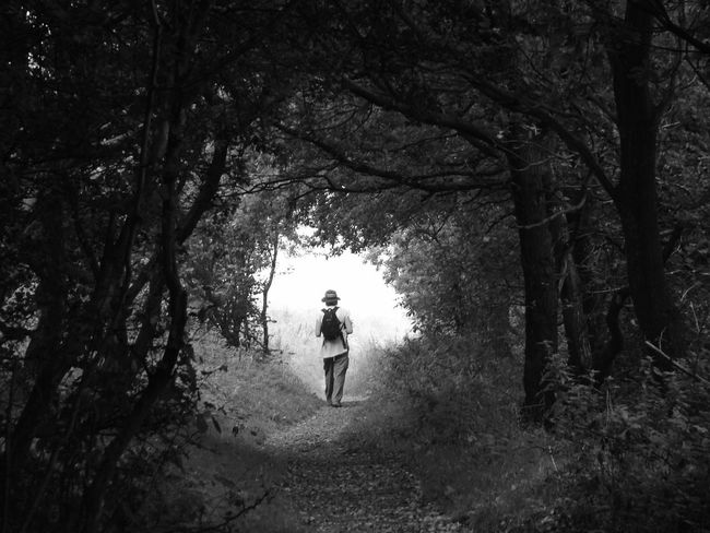 from the dark woods into the light Adult Black And White Branch Day Forest Full Length Leaving The Forest Leisure Activity Nature One Person Outdoors Real People Rear View Tree Tree Trunk Walking Woman WoodLand