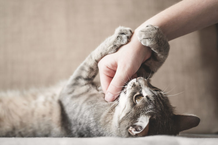 Midsection of person holding cat
