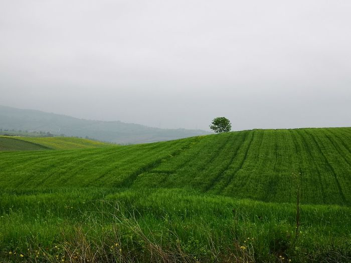 Minimal Minimalism Tree Rural Scene Agriculture Hill Beauty Field Plantation Agricultural Field Cultivated Land