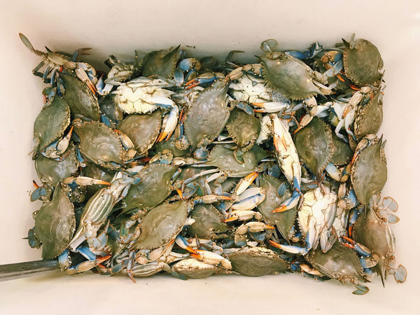Maryland blue crabs. New Jersey, USA. Photo by Tom Bland. Crab Crustacean EyeEm New Here Freshness Looking Down Maryland Blue Crabs SHELLFISH  Seafood Seafood Market The Week On EyeEm Blue Crab Crabs Crabs For Sale Fish Food Food And Drink For Sale Fresh Fresh Food Live Crabs Market No People Raw Food