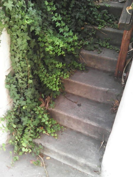 just leaves on stairs Green Green Leaves Leaves Leaves On Stairs Stairs To Nowhere Vines Vines On Walls Vines And Leaf Vines And Leaves This Is Natural Beauty Greenery Creeper Gardening Young Plant Ivy Creeper Plant