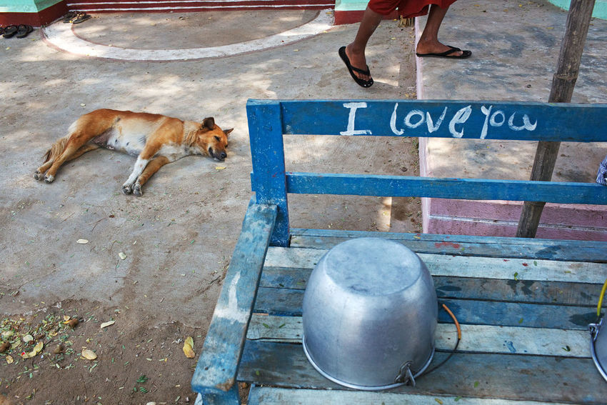 A lazy day in Nyaung U, Myanmar. ASIA Myanmar Nyaung Oo Streetphotography Street Photography Dog